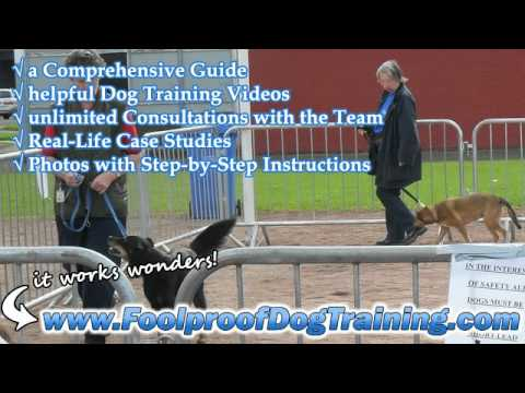 Dog Training Schools In Essex – Dog and Puppy Training
