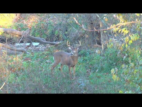 Big Missouri Buck Encounter – Backwoods Life