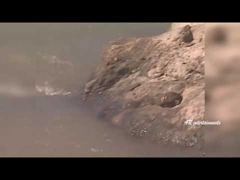 The Reptiles of the Desert   Unseen Videos of Monitor Lizard, Snake, Cobra   AR Entertainments