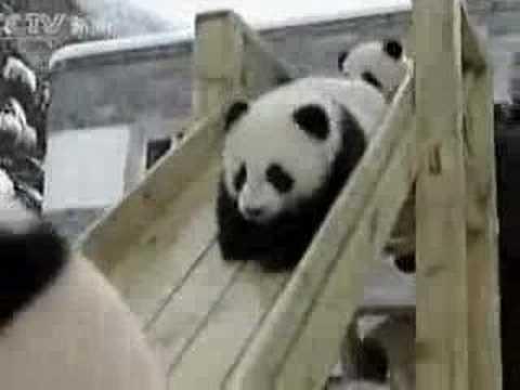 baby-panda-sullo-scivolo-312