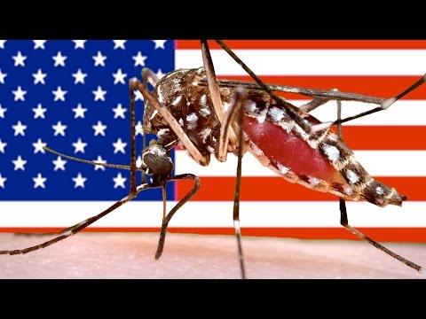 First Zika Virus Death In United States