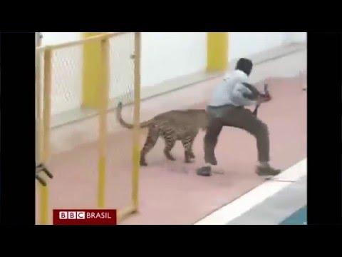 Leopardo invade escola e fere seis pessoas na Índia