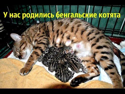 как выглядит только что родившейся котёнок