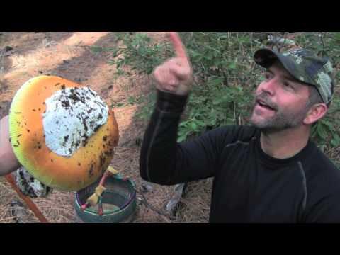 Mushroom Hunting with Henry Lomeli