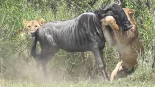 The incredible surroundings of the Maasai Mara makes this a spectacular safari experience.