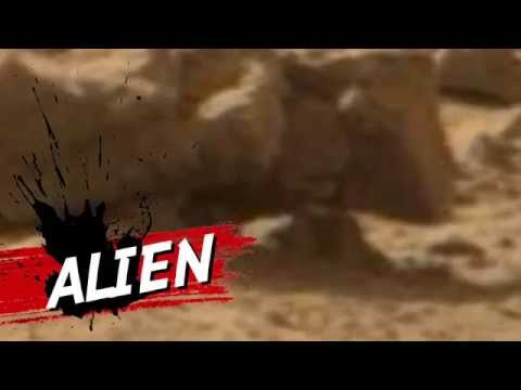 Alien Caught on Camera March 2014