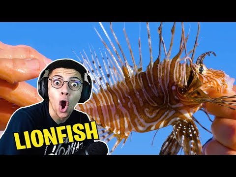 TSM Myth Reacts To STUNG by a LIONFISH!
