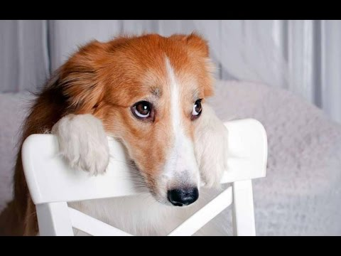 Best Of Funny Guilty Dog Compilation 2014