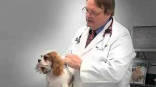 Animal Health Center - Canine Influenza