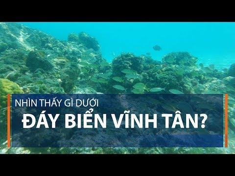 Nhìn thấy gì dưới đáy biển Vĩnh Tân? | VTC1 - Thời lượng: 2 phút, 59 giây.