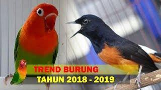 Video 5 Burung Bakal Trend Di Tahun 2019 Mendatng MP3, 3GP, MP4, WEBM, AVI, FLV Desember 2018