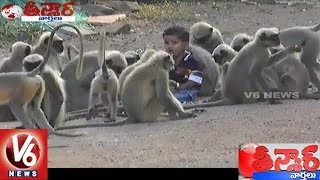 Boy Strikes Amazing Friendship With Band Of Langur Monkeys | Karnataka | Teenmaar News | V6 News