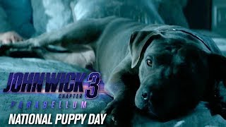 """John Wick: Chapter 3 - Parabellum (2019 Movie) """"Happy National Puppy Day"""" - Keanu Reeves"""