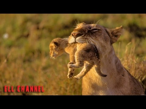 10 ყველაზე სასტიკი დედა ცხოველთა სამყაროში (ვიდეო)