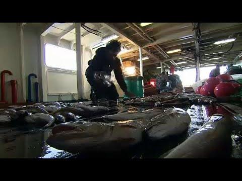 Συμφωνία υπουργών ΕΕ για ποσοστώσεις αλιευμάτων