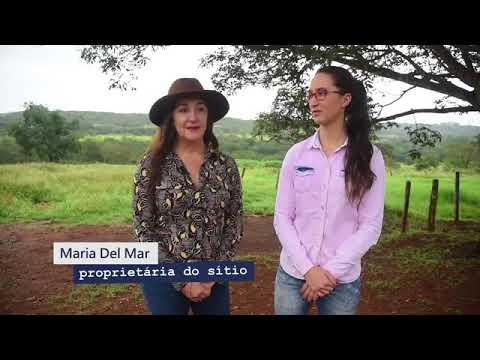 Correio Braziliense: A Força do Campo