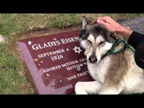 Es Suficiente Este Video De 9 Segundos Para Comprender Que El Perro Es El Mejor Amigo Del Hombre