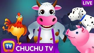 Video Farm Animals, Wild Animals & More ChuChu TV Surprise Eggs Learning Videos - Live Stream MP3, 3GP, MP4, WEBM, AVI, FLV April 2019