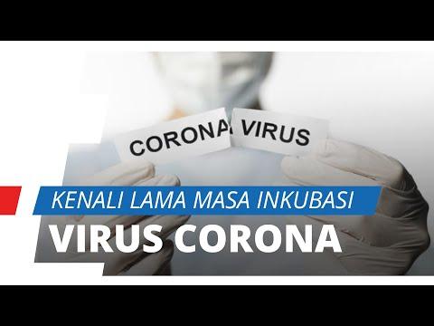 Penting Diketahui, Kenali Berapa Lama Masa Inkubasi Virus Corona di Dalam Tubuh
