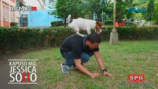 Aired: September 4, 2016 Have you heard of the smart dog named Milo of Antipolo, Rizal? Check out the dog tricks learned by this Jack Russell dog in this vid...