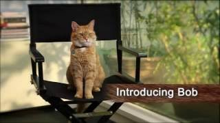 Nonton A Street Cat Named Bob - Introducing Bob - At Cinemas November 4 Film Subtitle Indonesia Streaming Movie Download