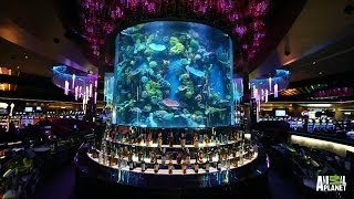 Reveal: Make a Bet on This Casino Tank | Tanked