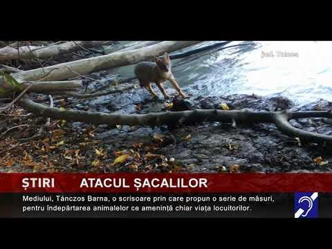 Alertă de șacali, în Delta Dunării