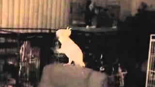 Танцующий попугай видео клип скачать бесплатно можно здесь видео клип скачать