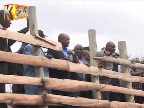Farmers Urged To Adopt Improved Cross-Bred Cattle.