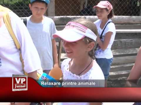Relaxare printre animale