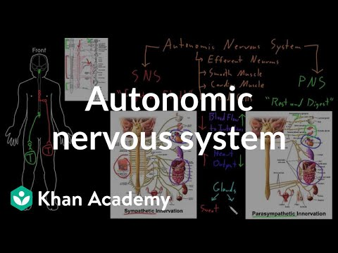 Functions of the Nervous System   Video   Lesson Transcript     Somatic and autonomic nervous systems
