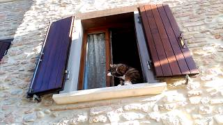 Castrocaro Terme Italy  City new picture : Kitties and doggies. Castrocaro Terme | On your own in Italy #01