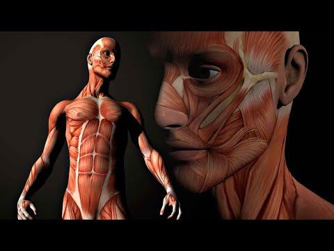 Músculos del Antebrazo - Parte 2   Bajool.com