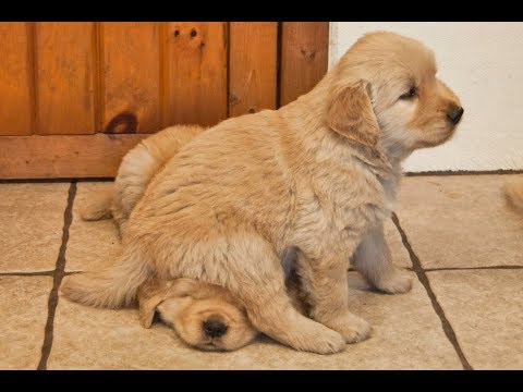 YOU Will NEVER STOP LAUGHING - FUNNY DOG Compilation