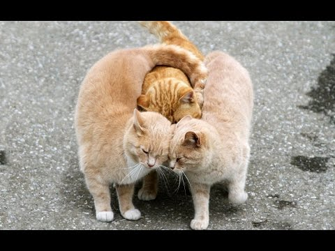 10 ragioni per cui dovresti adottare un gatto!