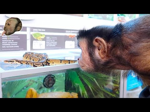 MonkeyBoo Visits PetSmart! (SNAKE ENCOUNTER)