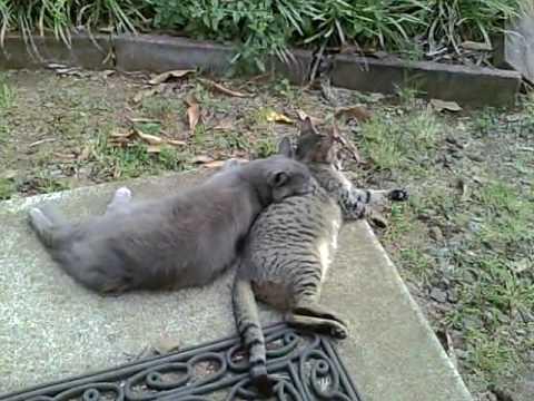My Cats Sonet And Mogli:  Part 2