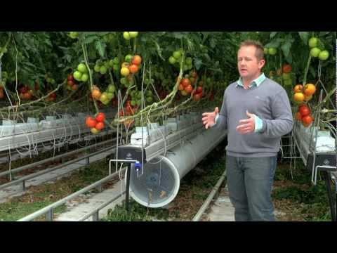 Greenhouse commercial Nature Fresh Farms Leamington