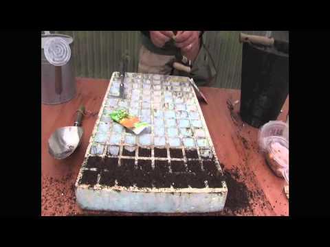 Cómo sembrar calabacines//Balcón comestible//LlevamealhuertoTV