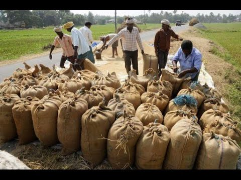 Thousands-of-paddy-bags-lying-on-the-road-due-to-closure-of-procurement