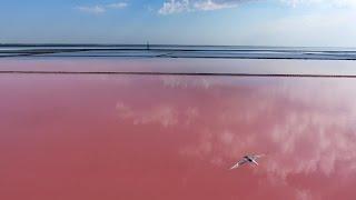 озеро сасык крым рыбалка пеленгас