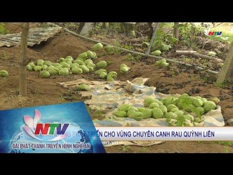 Hướng phát triển cho vùng chuyên canh rau Quỳnh Liên