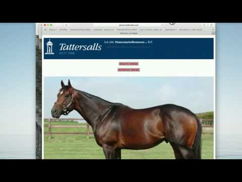 TUTORIAL: Uploading photos & videos to the Tattersalls website