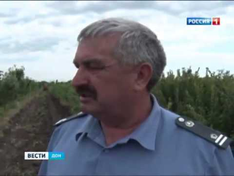 Вспышку опасного заболевания косточковых культур обнаружили в Ростовской области