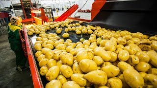 CRAZY FOOD PROCESSING MACHINES 2019 | POTATO