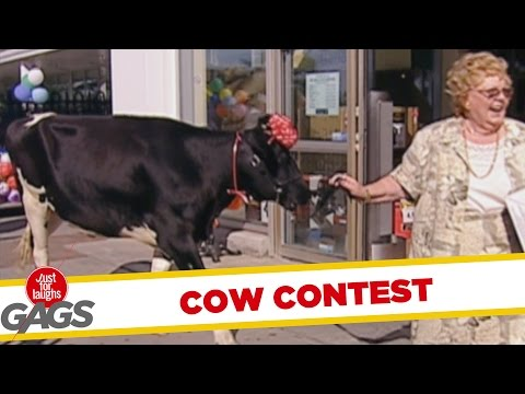 Video Win A Cow Prank - Throwback Thursday download in MP3, 3GP, MP4, WEBM, AVI, FLV January 2017