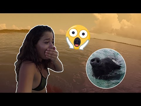 I WAS SO SCARED!!! (They attacked me)_Zene videók