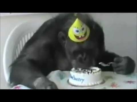 cita e' morto: una clip dedicata al più celebre scimpanzè della storia