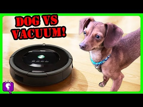 DOG Vs VACUUM: HobbyFlappy Competes The Roomba! Who Is Better At Cleaning? Challenge By HobbyKidsTV