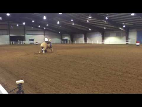 Roanoke valley horse show finals